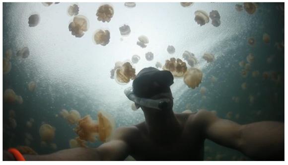 クラゲだらけの幻想的な湖、パラオの「ジェリーフィッシュレイク(Jellyfish Lake)」