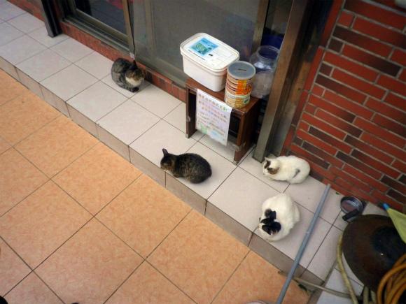 【闇の大人たち】第30回:台湾発 猫で儲けるニュービジネス