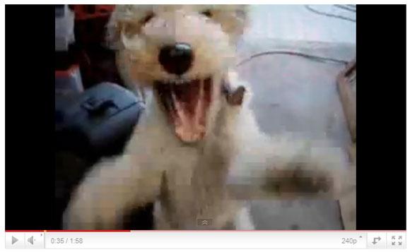 ドナルドダックみたいなヘリウム声で狂ったように笑いまくる犬がトラウマ級に怖い