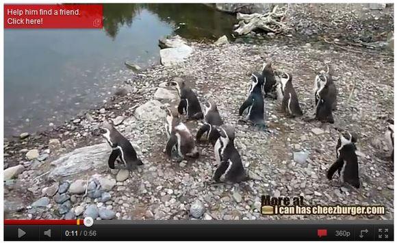海外ユーザーも涙! 周りに馴染めず一人立ち尽くすペンギンがせつなすぎる