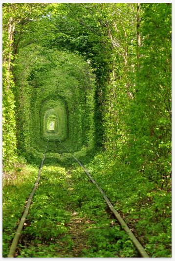 吸い込まれそうになるほど美しい! 緑葉に囲まれたウクライナの「緑のトンネル」