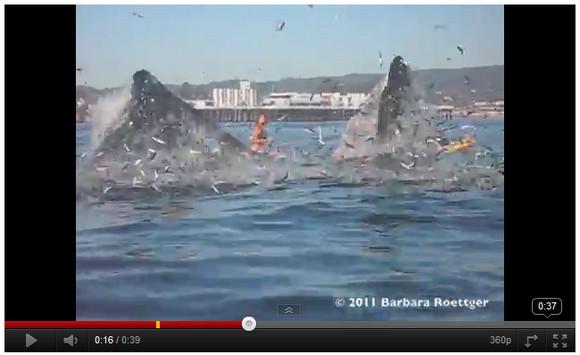 危機一髪! クジラに丸飲みされそうになったサーファー