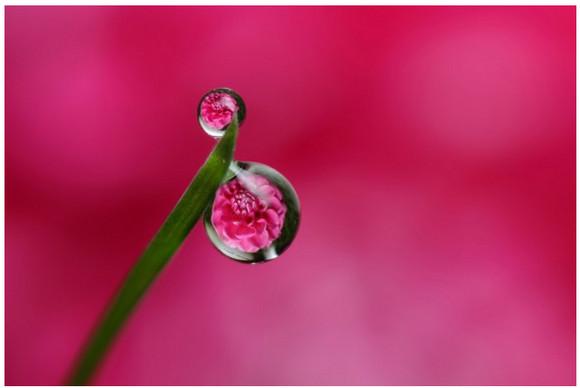 朝露に映る花がとても美しい