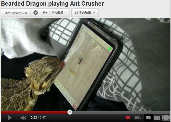 トカゲがタブレットのアプリ「アリ潰しゲーム」で遊ぶ様子が話題に / しかも命中率高し! 愛しく見えてくるぞ!!
