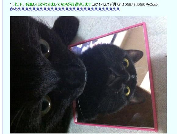 これは不思議! 猫の下に鏡を入れて撮影した画像が話題