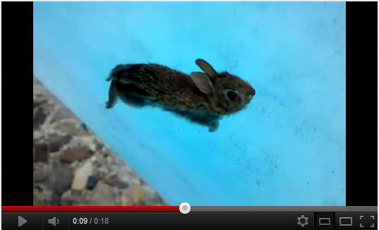 うさぎをプールに入れるとこうなる
