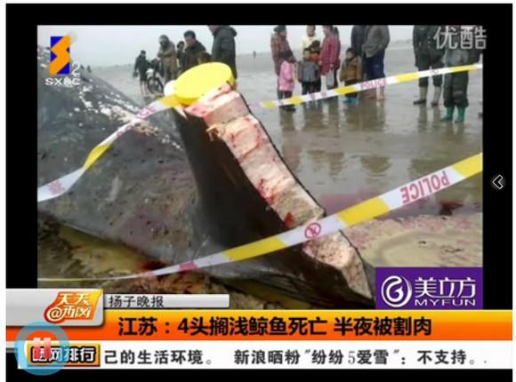 【中国】クジラ4頭が打ち上げられ死亡、マッハで肉が切り取られる