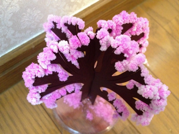 自宅で超簡単に桜を咲かせるキットが面白い!