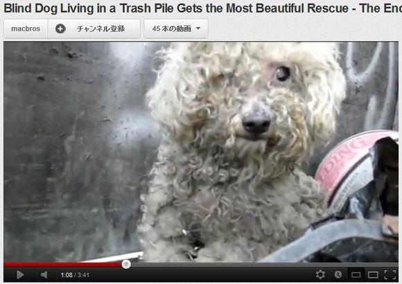 感動のラストに涙がとまらない! ごみのなかで生きる盲目の犬に光を取り戻す動画が世界で話題に