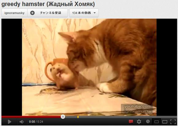 【実写トム&ジェリー】突然現れたネコにびびるハムスターのリアクションがアニメと一緒で笑った