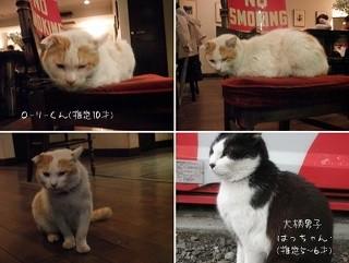 【吉祥寺】 閉店するカフェが看板ニャンコ2匹の里親を募集中