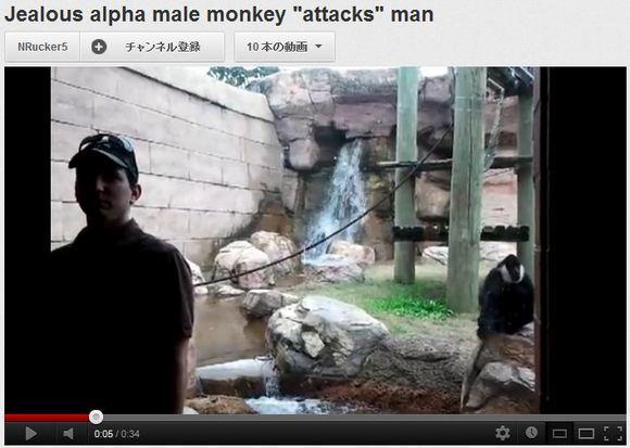 どこでこの技を習得したんだ! 仮面ライダー顔負けのスーパーキックを見せるボス猿が話題に