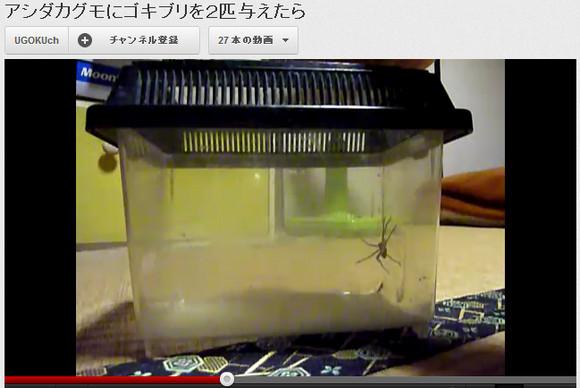 史上最強のゴキブリハンターことアシダカグモさんを見かけたら怖がらずに「お疲れ様です!」と挨拶しよう