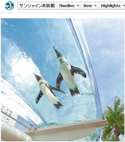 """自分もペンギンになりたい! この夏、池袋のサンシャイン水族館で """"空飛ぶペンギン"""" が見られるらしいぞ!!"""