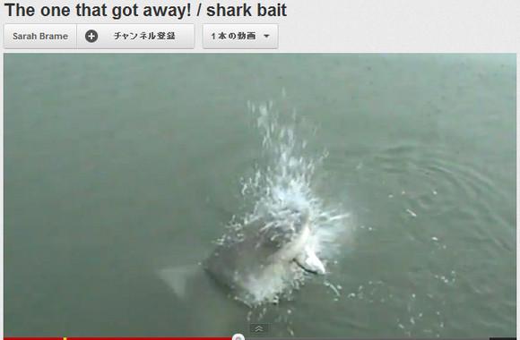 【衝撃動画】魚釣りしてたら獲物をサメに横取りされて大興奮する動画が話題に