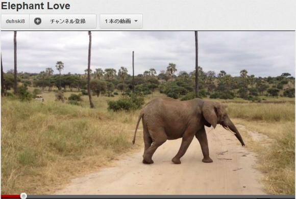 【キュン死注意報発令】「みんな待ってよ~!」と懸命に追いかける赤ちゃん象がもう可愛すぎるんだゾーーウ!