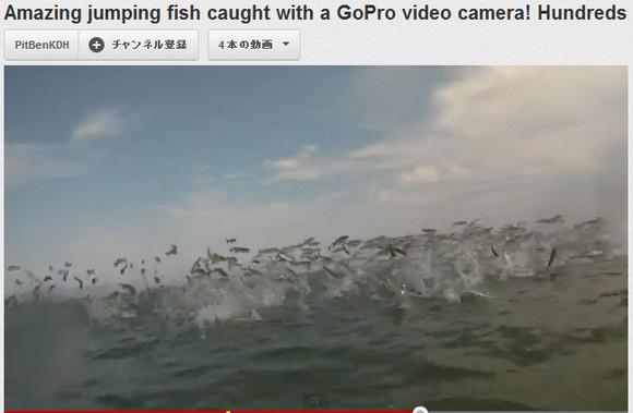 ぱ、ぱね~! 衝撃ビーチ動画「海水浴してたらボラの大群が飛んできた!」が話題に