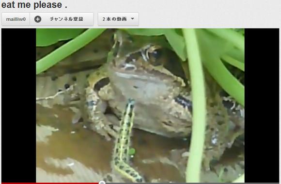 【衝撃動画】毛虫が自殺したと話題に
