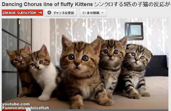 シンクロ率500パーセント!? みんなで同じ動きの子猫が悶絶かわいいっ  / 興味無い素振りからのシンクロがたまらないのだ