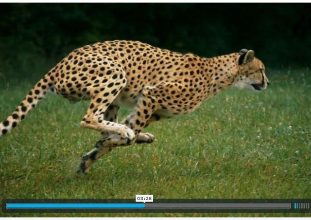 """見とれてしまうほどの美しい筋肉! 地上最速の動物 """"チーター"""" の超スローモーション動画が必見すぎる!!"""