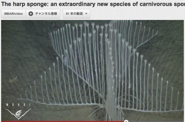 水深3300メートルの深海で発見された肉食生物の形がスゴすぎると話題に