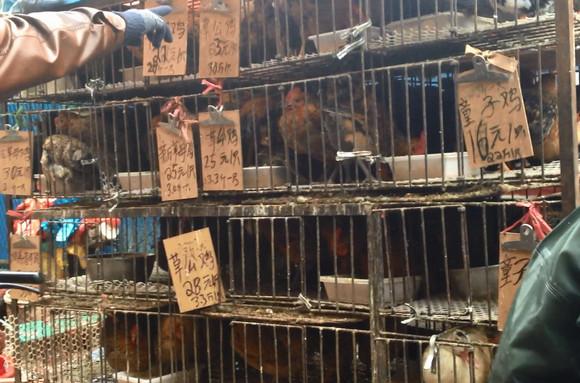 日本マクドナルドが中国産「病死した鶏の肉」を使用か!? 本当に安全かどうか電話で問い合わせてみた