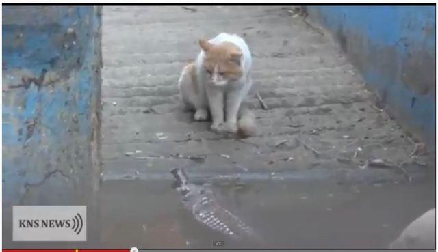 ニャンコ最強説 / 高速猫パンチでワニを撃退するニャンコが目撃される