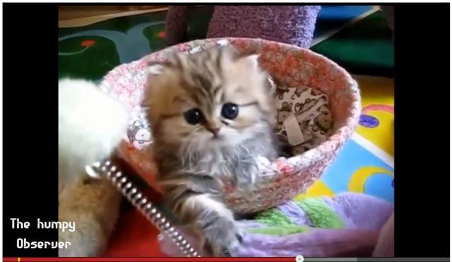 【究極癒し動画】カワイイは世界を救う! 超絶キュートな動物が次々と登場する癒しの6分間をどうぞ!!