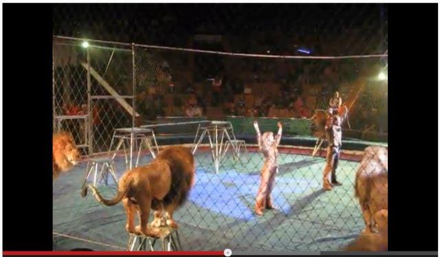 【閲覧注意】サーカスのライオンたちが公演中にトレーナーを襲い始め会場が悲鳴の嵐に包まれる