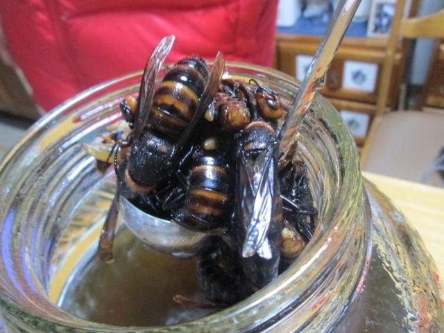 生きたスズメバチで作った焼酎を飲んでみた → 塩っぽい味がした → 「それ毒成分です」