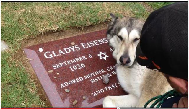 亡きおばあちゃんのお墓の前でひたすら「泣く」忠犬が多くの人の感動を呼ぶ