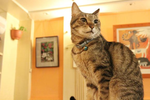 【トリビア】世界初の猫カフェは台湾だった! 台北の「猫花園」はオーナーのニャンコ愛があふれる素敵なお店