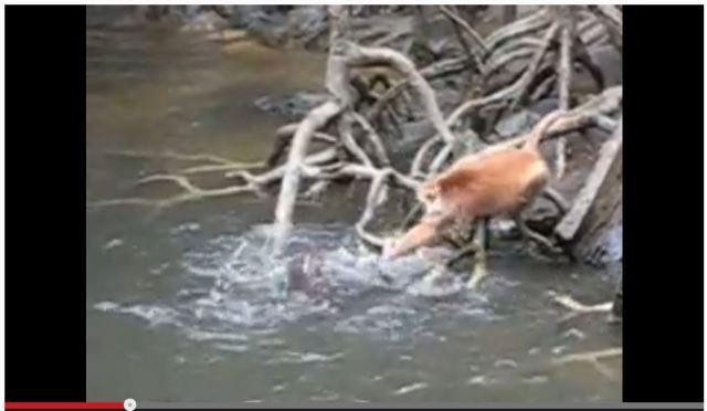 【視聴注意】カワウソたちが猿をかみ殺す動画が恐ろしすぎる