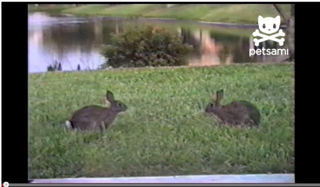 【新時代動画】馬跳びなんてもう古い! これからは「ウサギ跳び」の時代だ!!