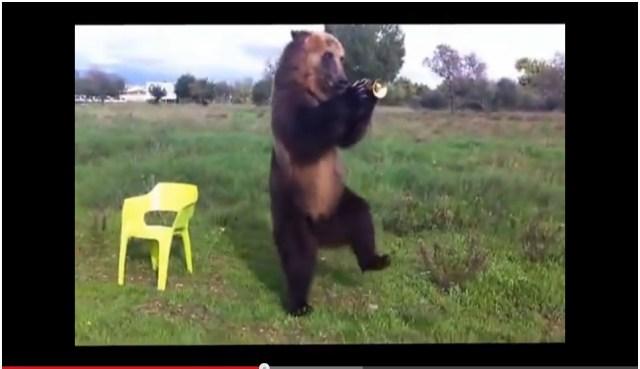 【衝撃動画】「中に人が入ってるだろ!」と疑われるほどハンパなく賢い熊