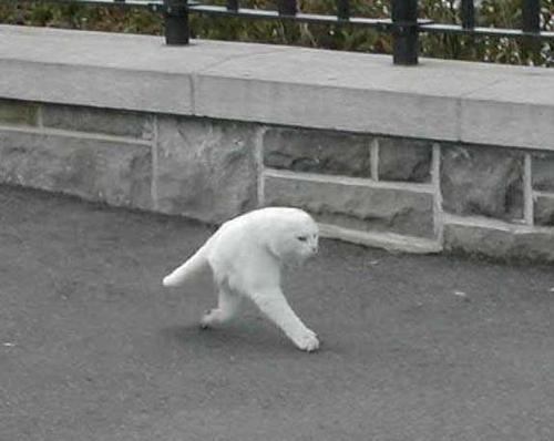 【新種か】Googleストリートビューが「2本足のネコ」を激写していたと話題に