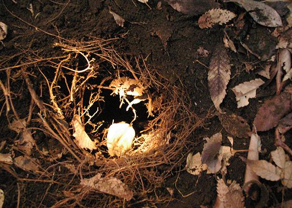 【闇の偉人】スコップ片手にピンポイントで穴を掘り片腕を突っ込んで遺物をもぎ取る伝説的な発掘師