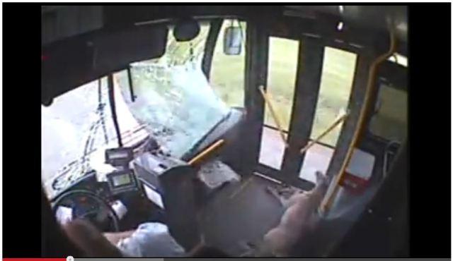 【衝撃映像】史上最高にデンジャラスな方法で乗車した鹿が話題に