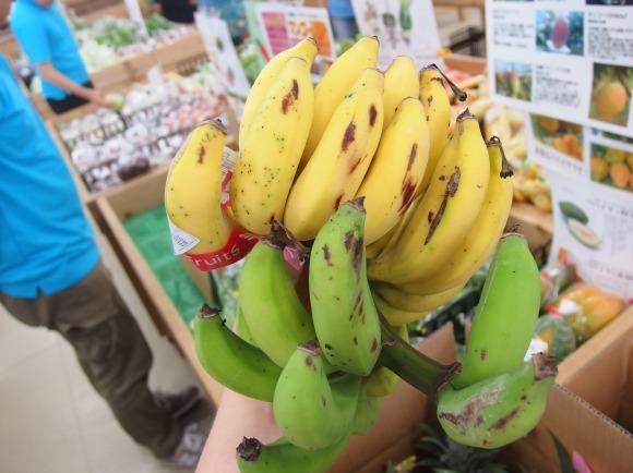 【泥棒が出るほど美味】めったに流通しない石垣島伝説のフルーツ『島バナナ』 がウマすぎ! 他のバナナとはいったい何だったのか