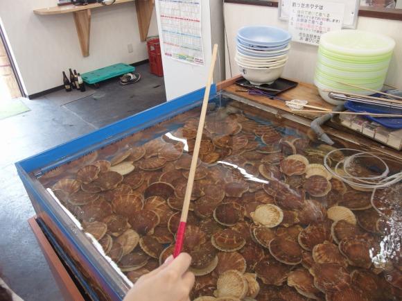 【青森県】青森駅から徒歩30秒で500円ホタテ釣り体験 / 釣ったホタテは無料で刺身や寿司にしてくれる