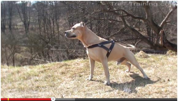 【ナターシャ通信】ウクライナでもっとも有名なスーパー犬「トレト君」をご覧ください!