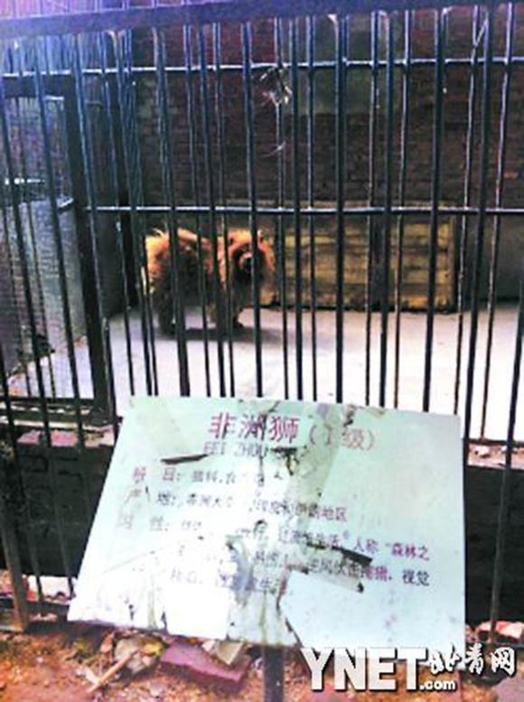 中国の動物園でライオンが「ワンワン」と鳴く珍事発生 → 犬だった / 動物園「ライオンがいなかったので」