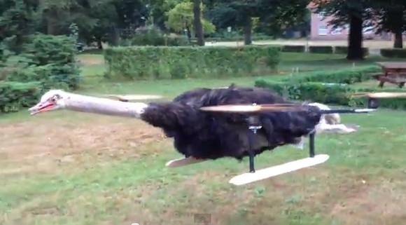 【衝撃動画】死亡したダチョウをラジコンのヘリコプターにして大空に飛ばした男 / 飛べない鳥が空を飛ぶ