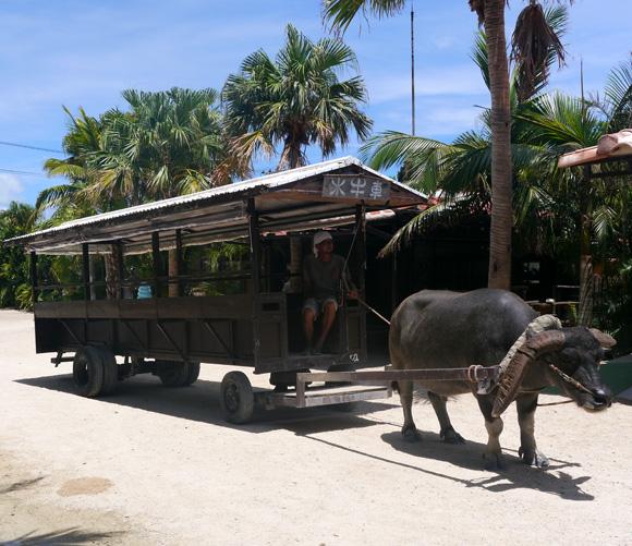 三線を聞きながら島を巡る「日本一穏やかな乗り物」水牛車 / 沖縄県・竹富島
