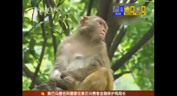 【衝撃】野生のサルが男の子の睾丸を引きちぎって食べる事件が発生