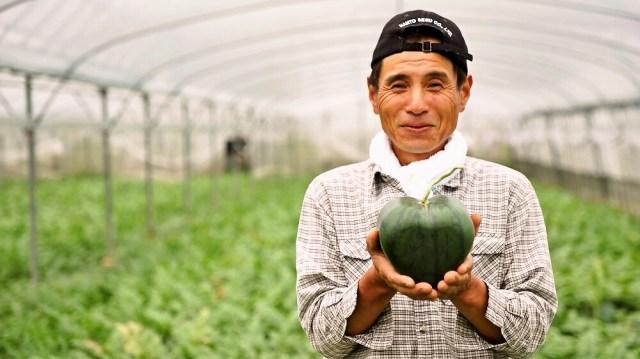 世界初のハート型スイカを作る農家に直撃取材「誰もできないことに挑戦したかった」
