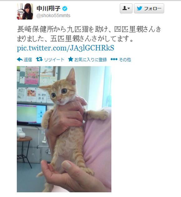 タレントの中川翔子さんが保健所から9匹の子猫を救い里親探し中! ライブでの引き渡しも / ネットの声「しょこたん天使すぎる」