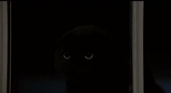 【猫動画】オチがわかっていてもドキドキしちゃう「実はニャンコでしたー!」な場面集