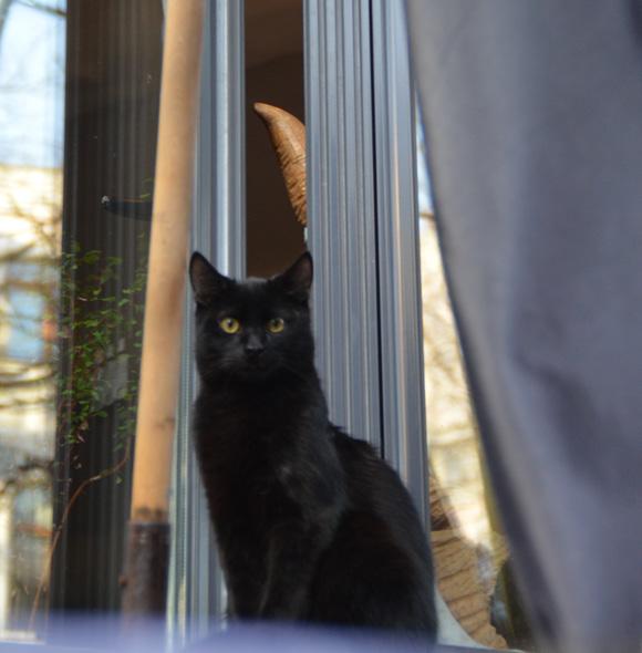 【ナターシャ通信】猫好き必見! ウクライナ首都キエフの可愛い猫たち!!