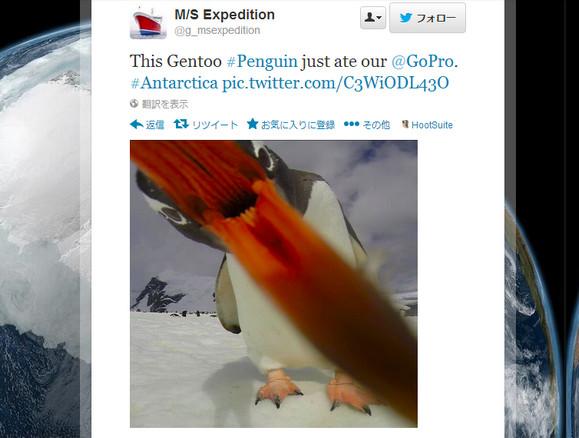 【衝撃画像】何じゃコリャ!? ペンギンのお食事風景が狂気を感じるほど豪快だと話題